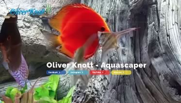 Oliver Knott, former World Champion in Aquascaping